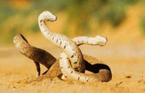 影响蛇微量元素代谢的因素有哪些