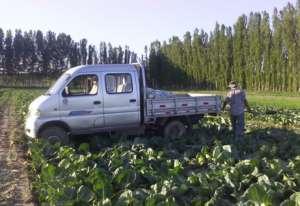 霍城县惠远镇特色蔬菜种植喜获丰收